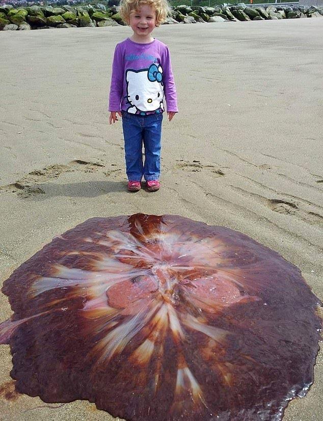 Самую крупную ядовитую медузу в мире выбросило на пляж