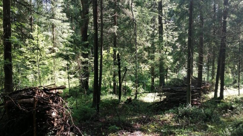 Санитарно-оздоровительные мероприятия проводят в лесах Московской области