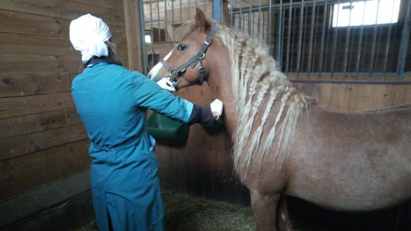 Ветврачи Подмосковья отобрали более 50 проб биоматериала для исследования болезней лошадей