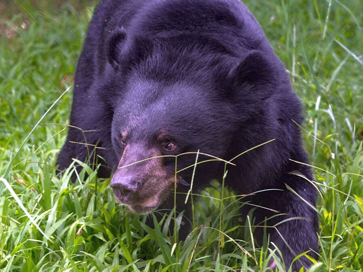 Встреча медведя с туристкой попала на видео