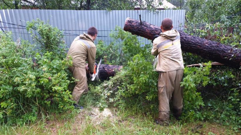 Жителю Луховиц помогли убрать упавшие деревья с участка