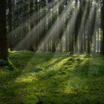 Дистанционная беседа «Экскурсия в лес»