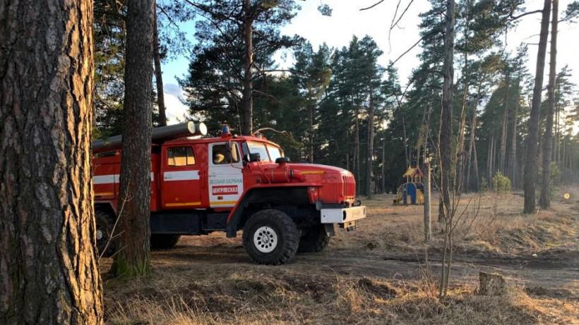 Два лесных пожара ликвидировали в Подмосковье в минувшие выходные