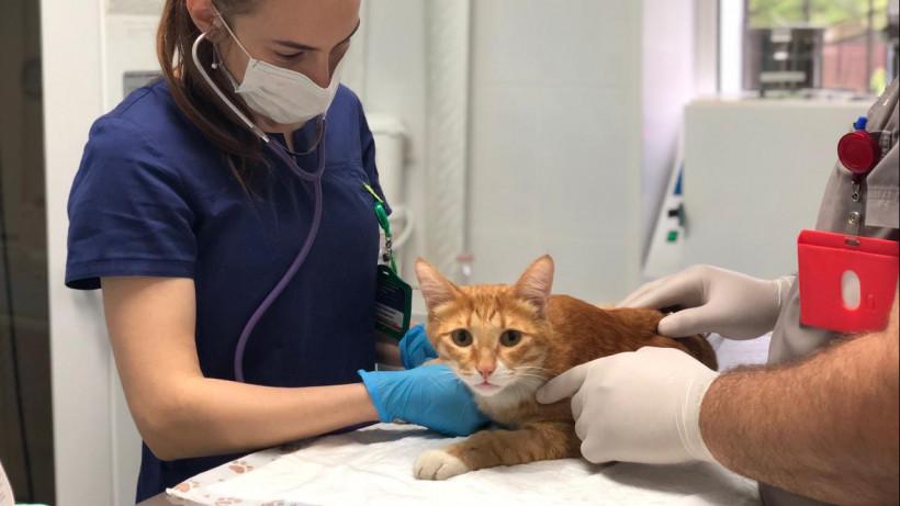 Госветклиники Подмосковья будут стерилизовать безнадзорных кошек раз в месяц