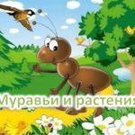 Экологическая игровая программа «Веселый муравейник»