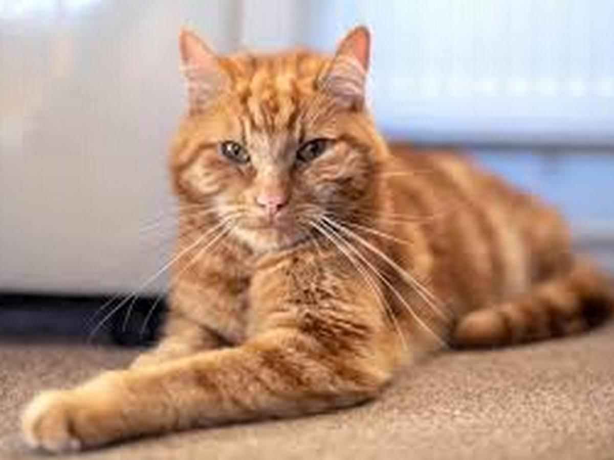 Кот пробежал более 60 километров, чтобы вернуться к хозяевам
