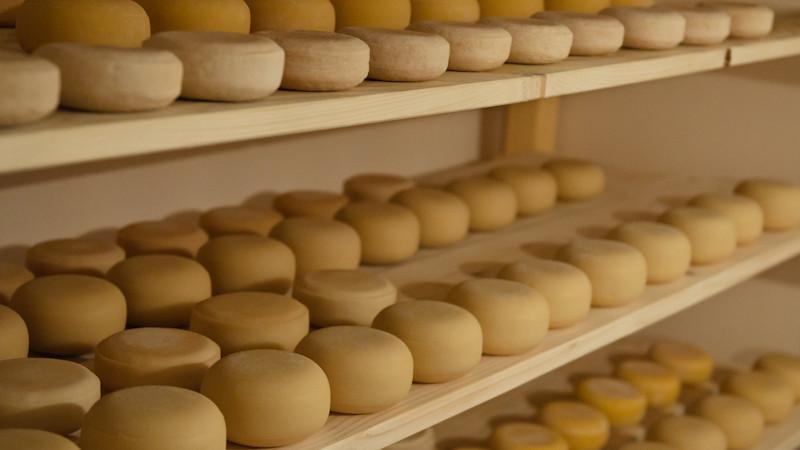 Лучший сыр России определят на фестивале «Сыр. Пир. Мир» в Истре