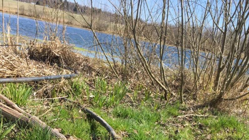 Загрязнение озера
