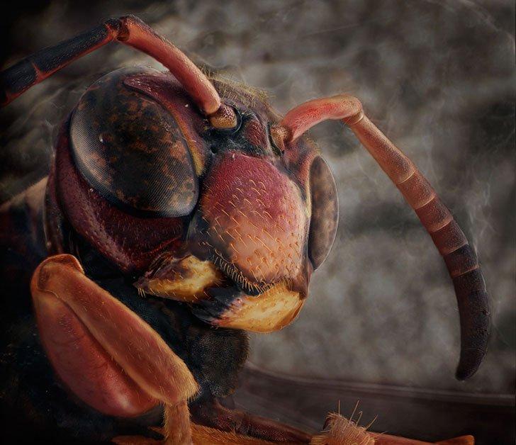 Необычные портреты знакомых вам насекомых