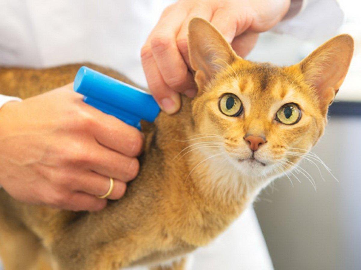 Россиян могут обязать маркировать домашних животных