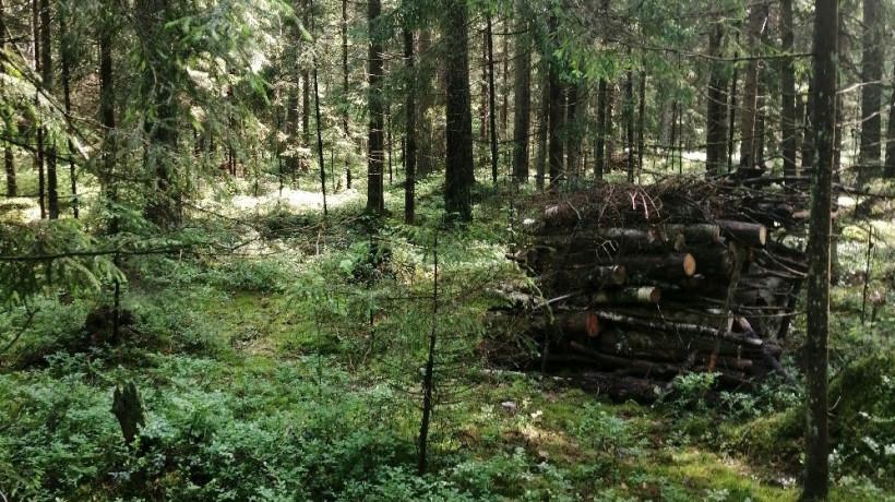 Санитарно-оздоровительные мероприятия проводятся в лесах Подмосковья