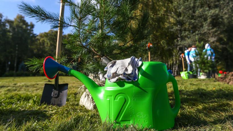 Губернатор дал старт экологической акции «Наш лес. Посади свое дерево» в Звездном городке