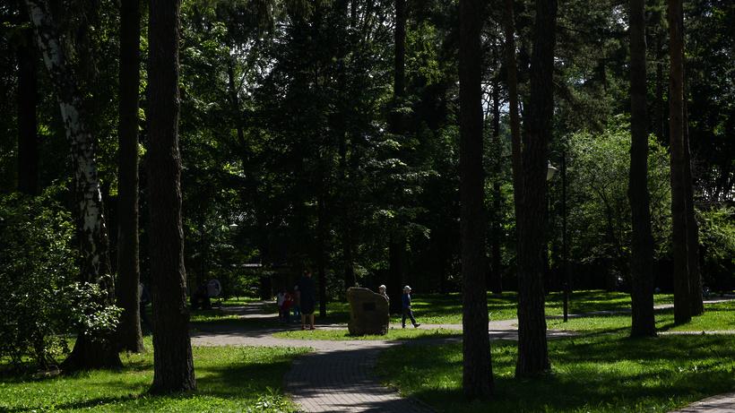 Свыше 140 лавочек-навигаторов помогают сориентироваться в подмосковных лесах