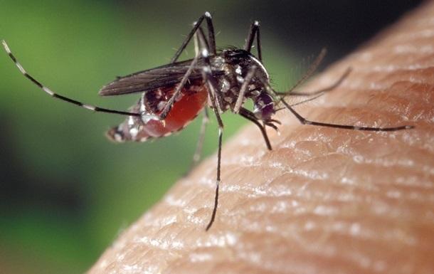 В США выпустят на волю 750 миллионов ГМО-комаров