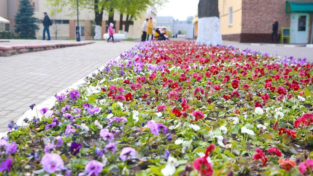 Более 2 млн луковичных растений высадят в Московской области осенью