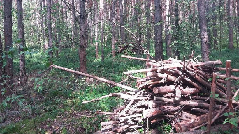 Cанитарно-оздоровительные мероприятия продолжаются в лесах Подмосковья