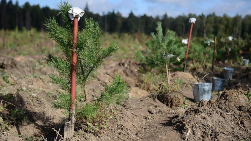 Виртуозова приняла участие в ежегодной акции «Наш лес. Посади свое дерево»