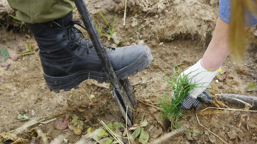 Как в Подмосковье проходит акция «Наш лес. Посади свое дерево» в условиях пандемии коронавируса