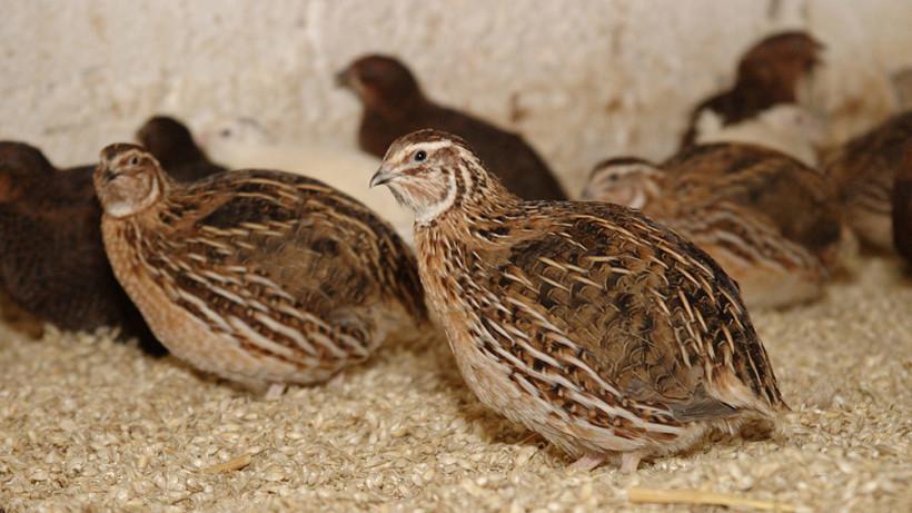 Модернизация птицефабрики в Сергиево-Посадском округе завершена на 90%