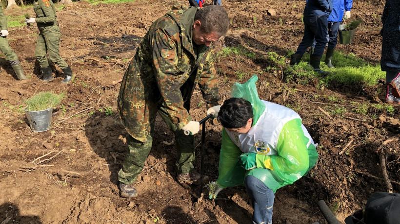 Московская область подвела итоги первых десяти дней всероссийской акции «Сохраним лес»