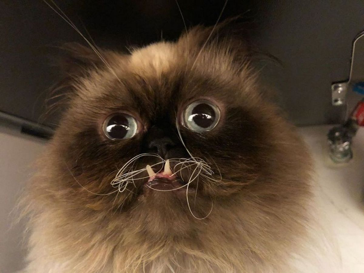 На кота-вампира подписались 49 тысяч человек