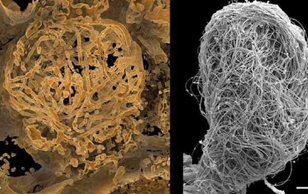 Найдена сперма возрастом более 100 млн лет