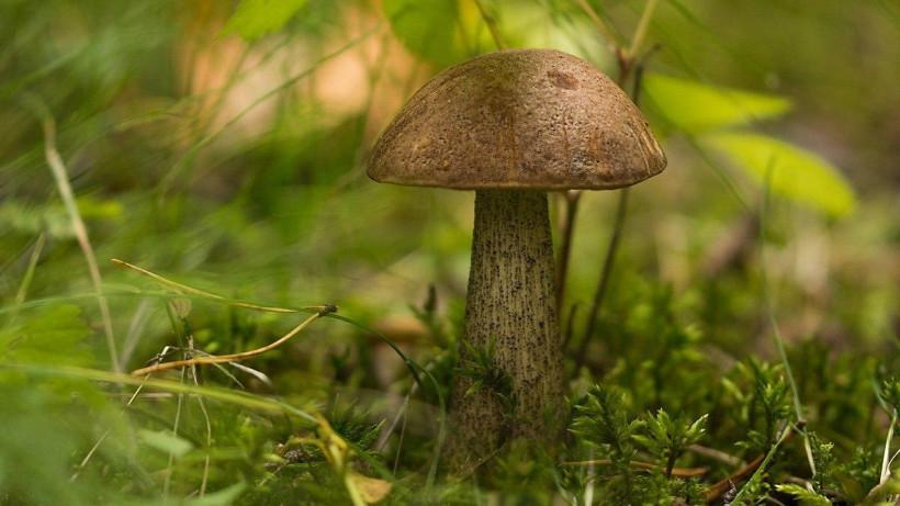 Сезон грибов начался в Подмосковье