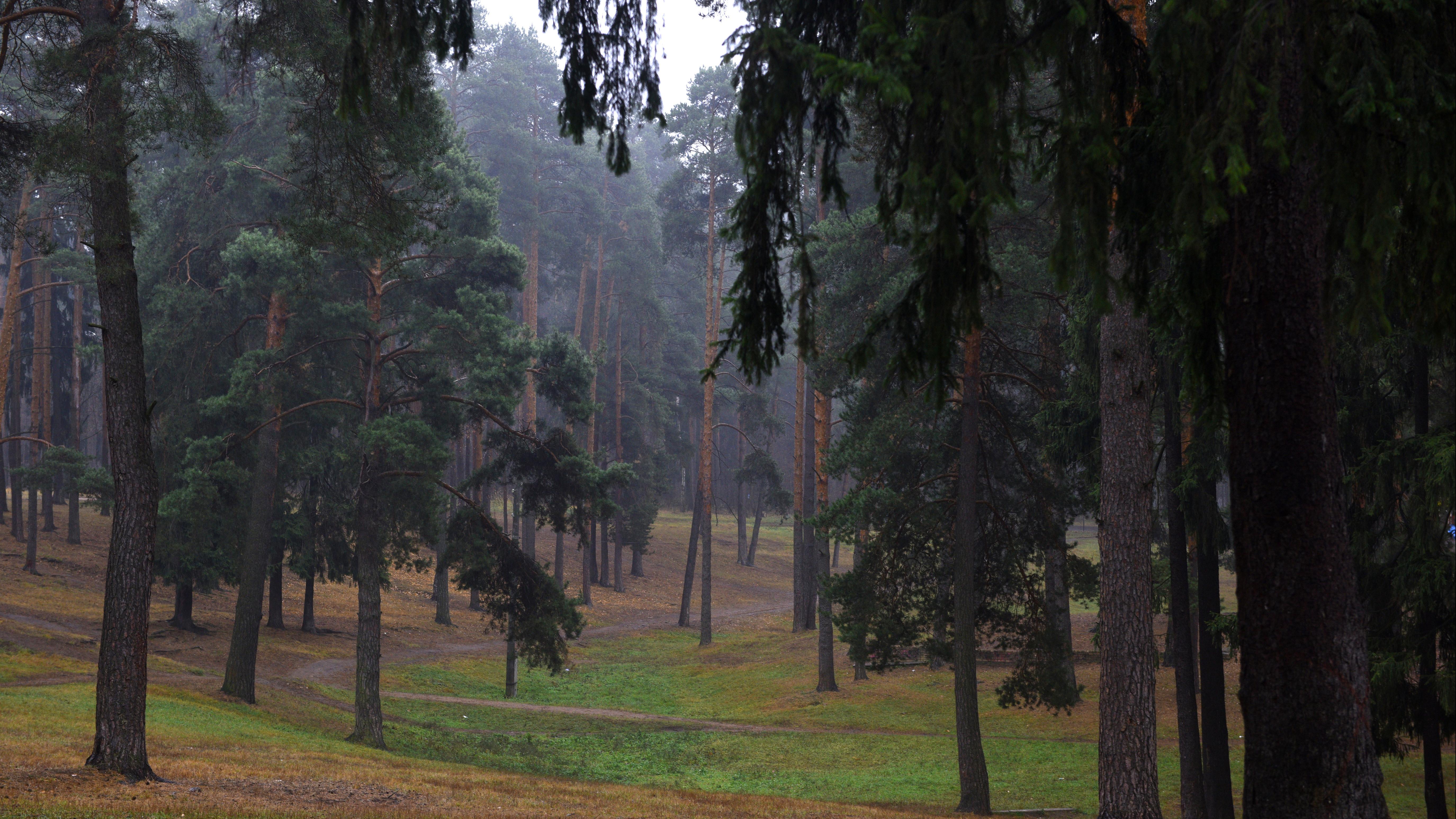 Свыше 150 лавочек-навигаторов установили в лесах Подмосковья