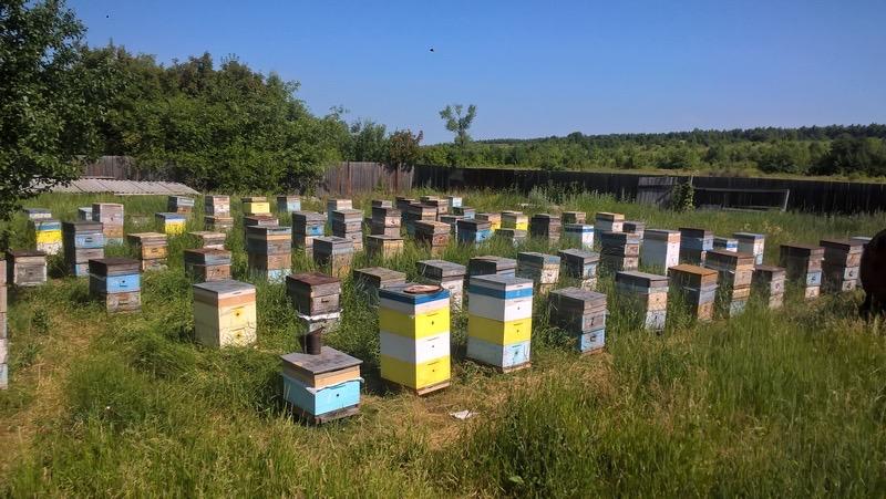 Свыше 830 исследований пчелосемей провели в Подмосковье с начала года