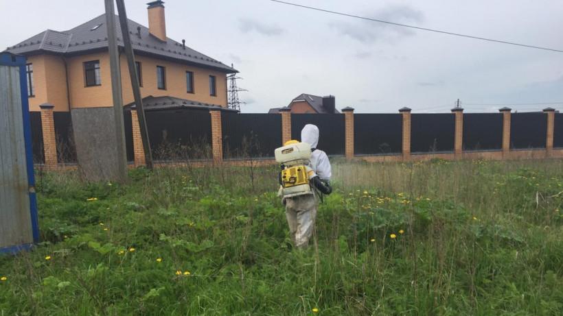 Третий этап работ по борьбе с борщевиком завершился в Московской области