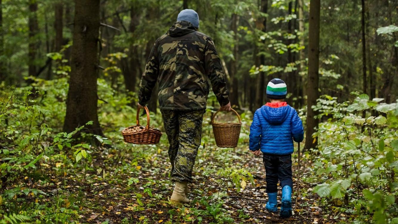 Более 1,1 тысячи человек заблудились в подмосковных лесах с начала 2020 года