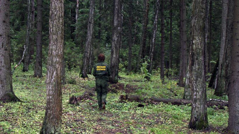 Четыре нарушения лесного законодательства выявили в Подмосковье в рамках спецмероприятия