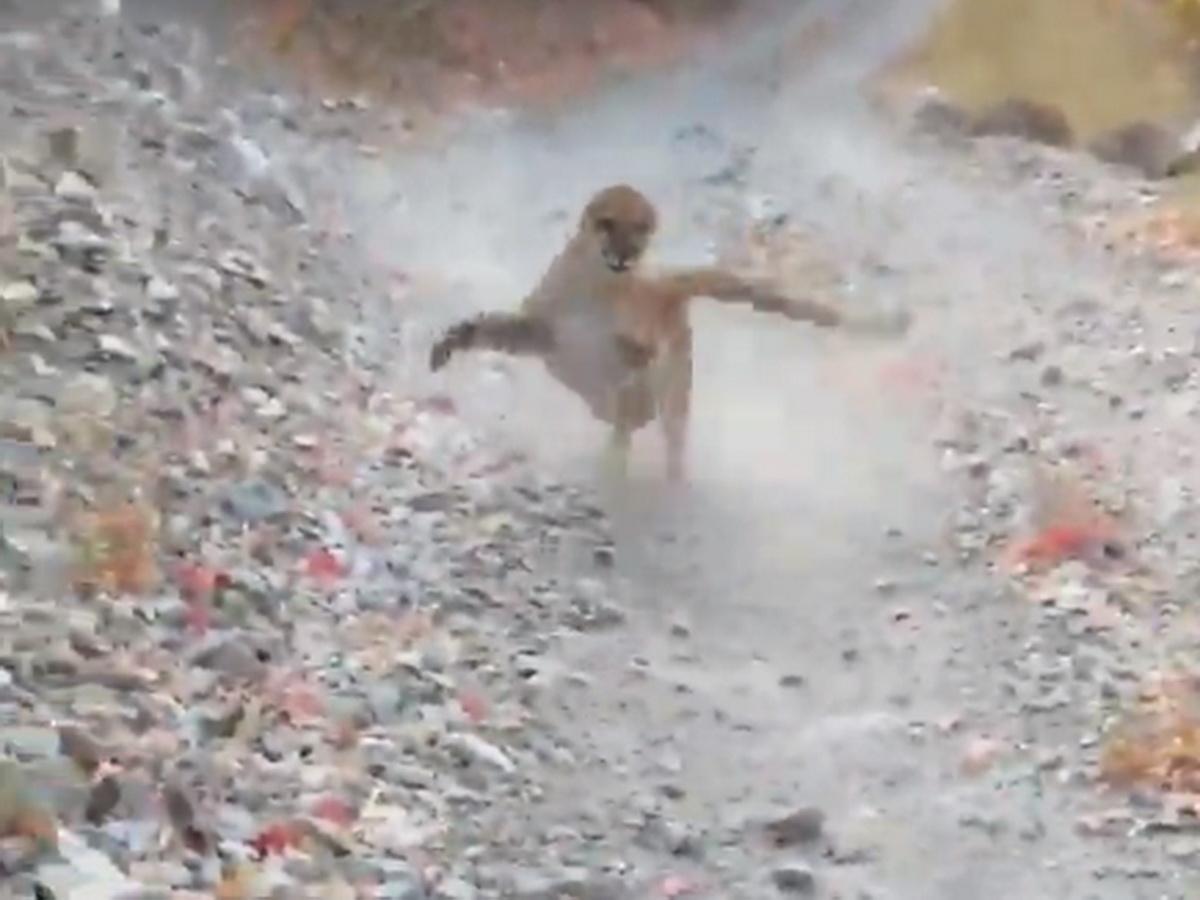 """""""Я думал, мне конец!"""": турист из Юты снял на видео, как его 6 минут преследовала пума во время прогулки по парку"""