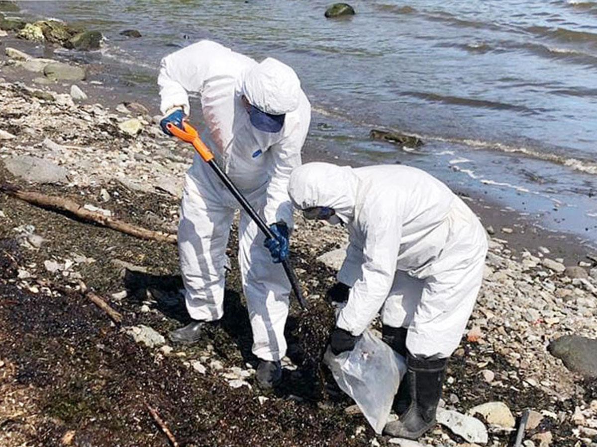 """""""Яд убивает все вокруг"""": Дудь показал видео разлива нефти на Камчатке, где тысячи морских животных выбросились на берег"""