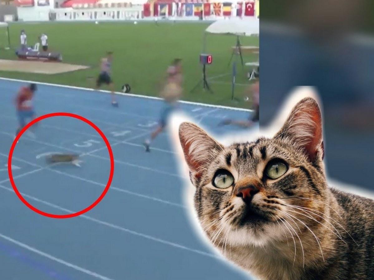 Кот принял участие в соревнованиях по бегу