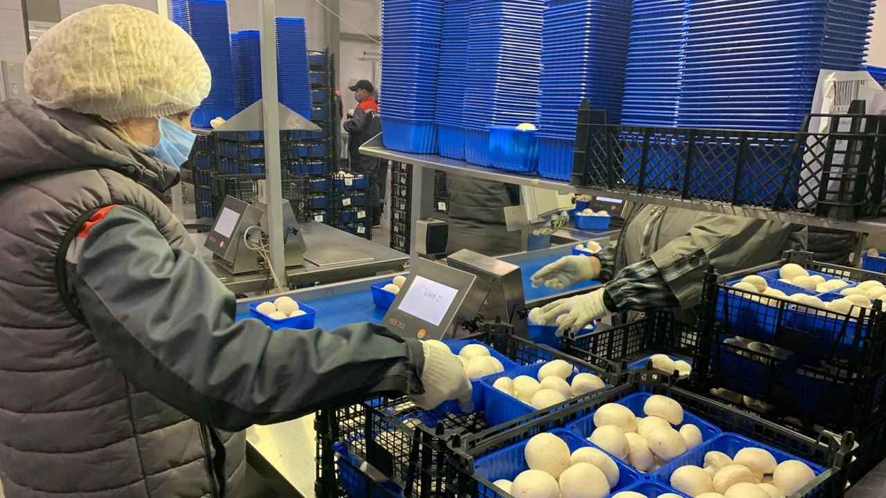 Крупнейший грибной комплекс открыли в Подмосковье