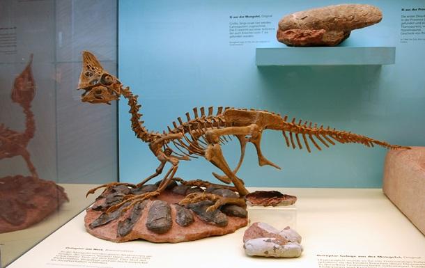 Палеонтологи обнаружили останки нового вида динозавров