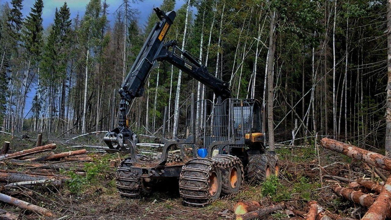 Проверки проходят в местах проведения рубок лесных насаждений в Подмосковье