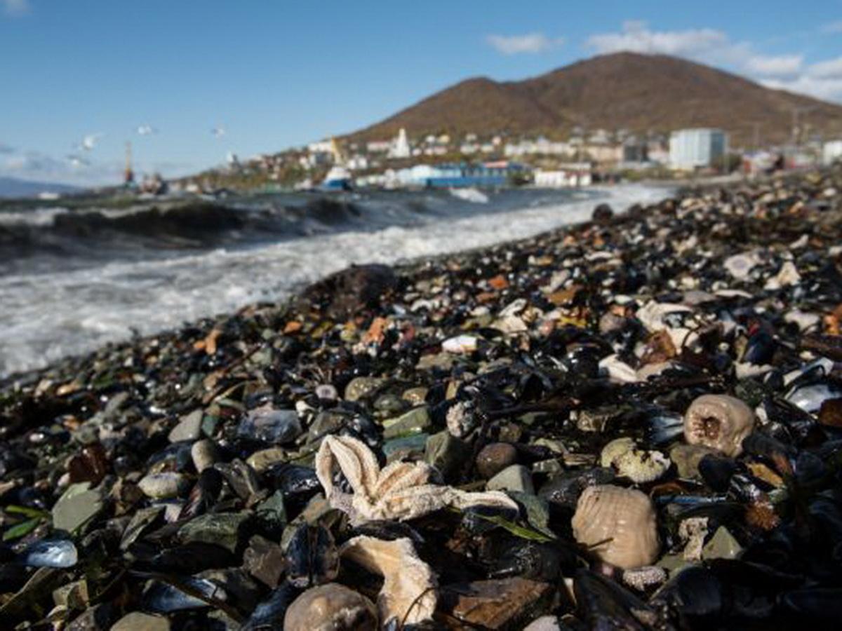 Сбросившее отходы у Камчатки судно нашли по фото со спутника