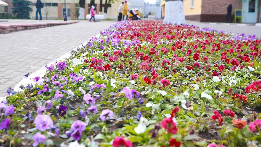 Свыше 860 тыс. цветочных луковиц высадили в Подмосковье