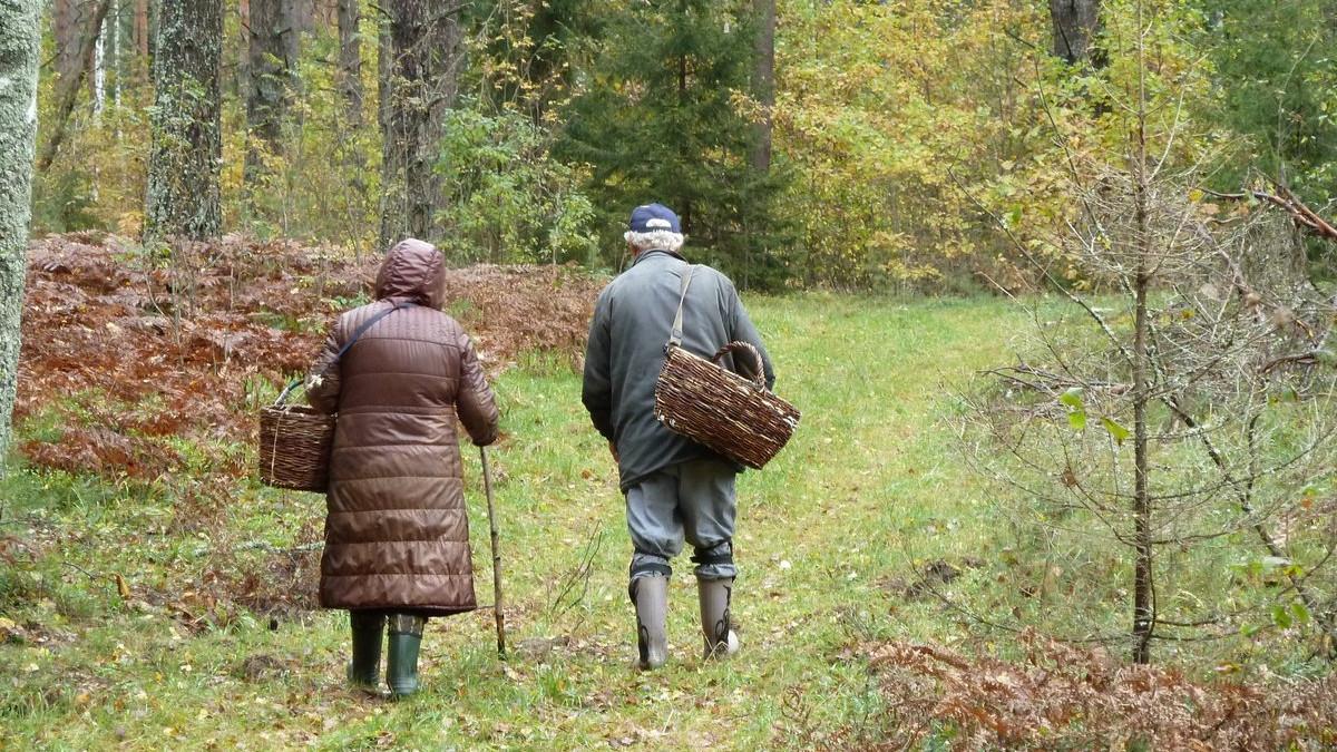 Более 50 человек заблудились в лесах Подмосковья в октябре