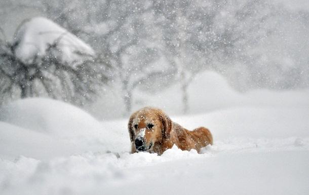 Холодная и снежная зима. Ла-Нинья меняет погоду