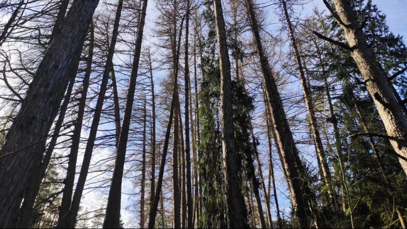 На территории Баулинского леса в Раменском округе введут жесткий режим охраны