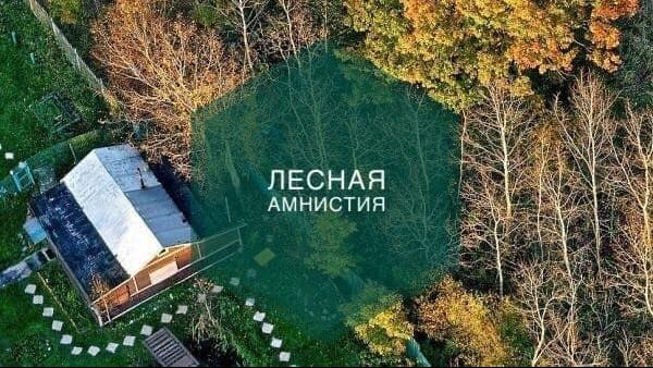 Сведения о более 2,3 тыс. лесных участков привели в соответствие в Подмосковье