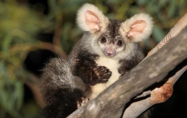 В Австралии нашли два новых вида млекопитающих