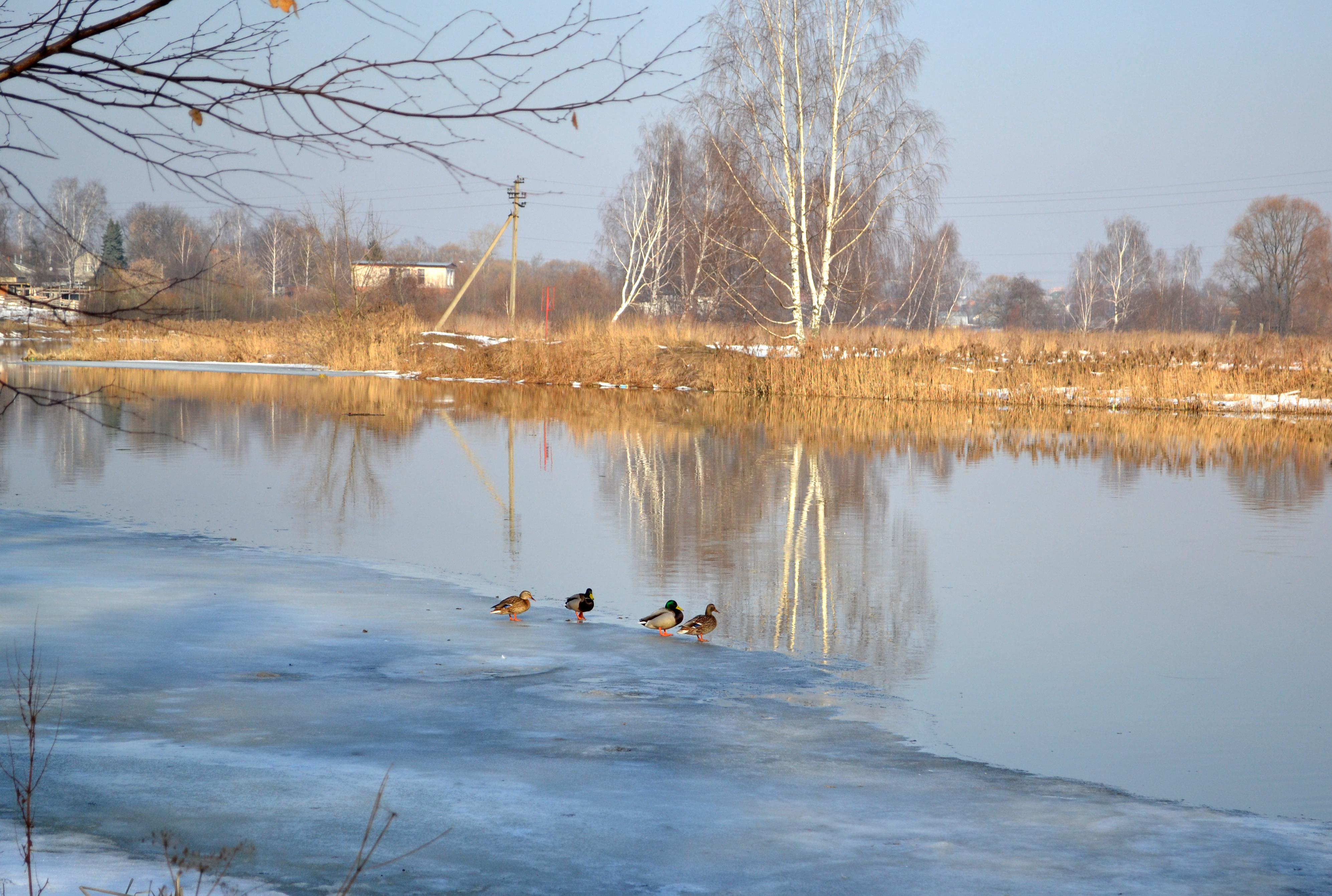 Виновников загрязнения берегов Клязьмы установили после вмешательства Минэкологии Подмосковья