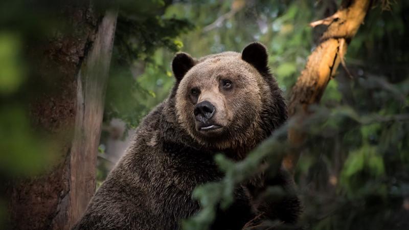 Замеченного в городском округе Мытищи медведя перевезут подальше от населенных пунктов