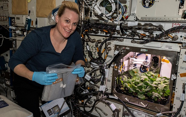 Астронавты собрали на МКС первый урожай редиса