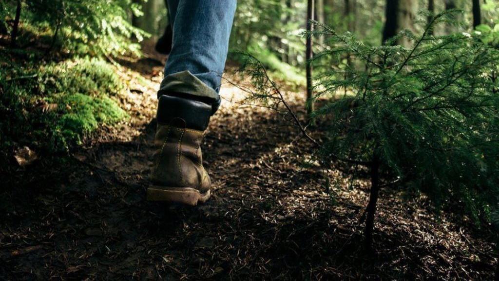 Более 2,5 тыс. гектара леса высадили в Подмосковье в 2020 году