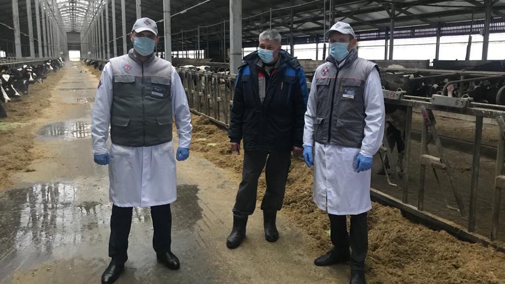 Более 58 тыс. голов скота ввезли в Подмосковье из регионов РФ и Евросоюза с начала года